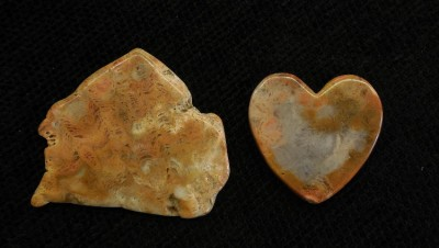 WV Coral slab & heart, from  Pocahontas County, West Virginia